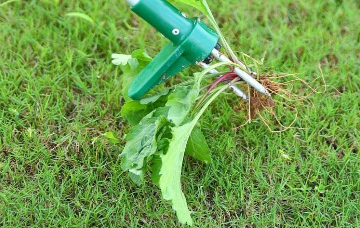 best weed poopper