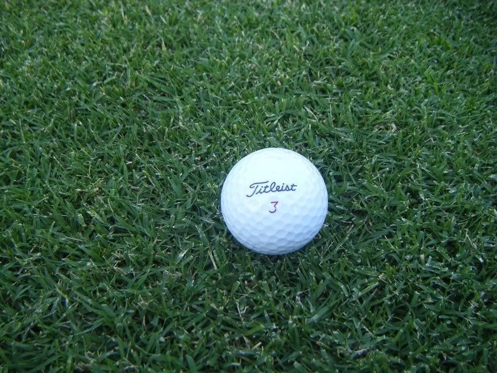 princess 77 bermuda grass