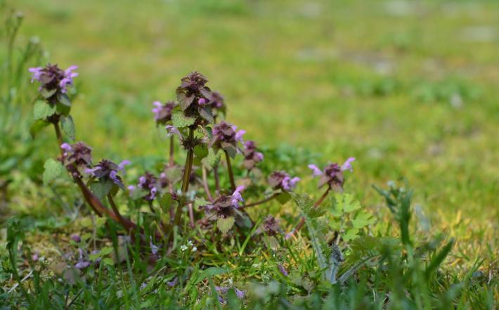 yard lawn weeds