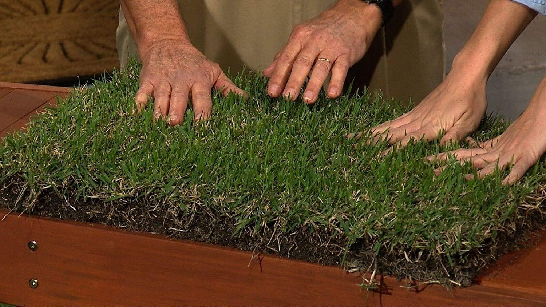 zoysia grass vs