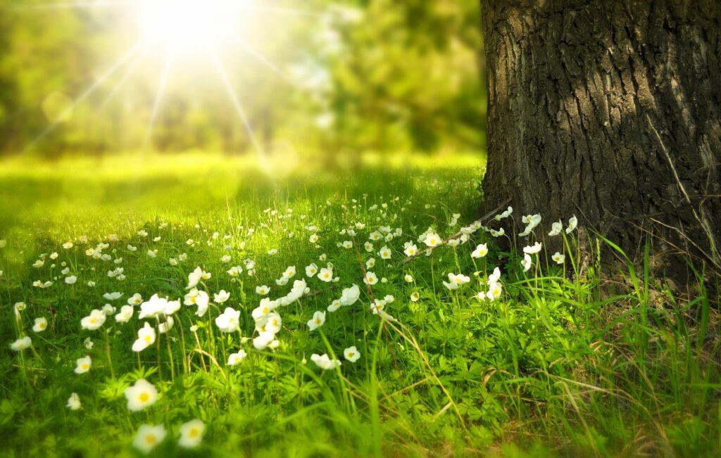 ringer lawn restore vs milogranic
