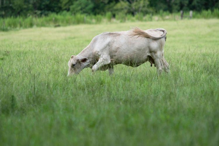 Bermudagrass High Traffic Grass