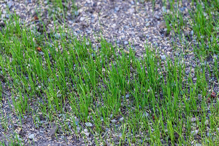 How to Overseed Lawn in Northeast