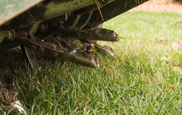 overseeding lawn in northeast