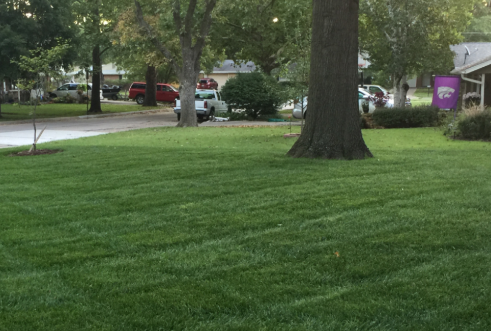 Kentucky 31 Tall Fescue Review