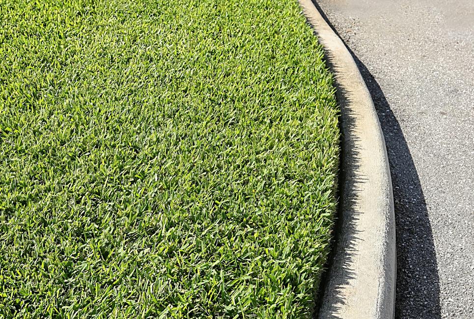 shade tolerant grass st augustine