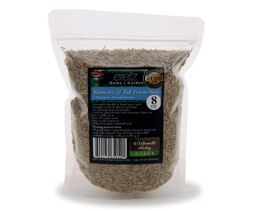 kentucky 31 seeds