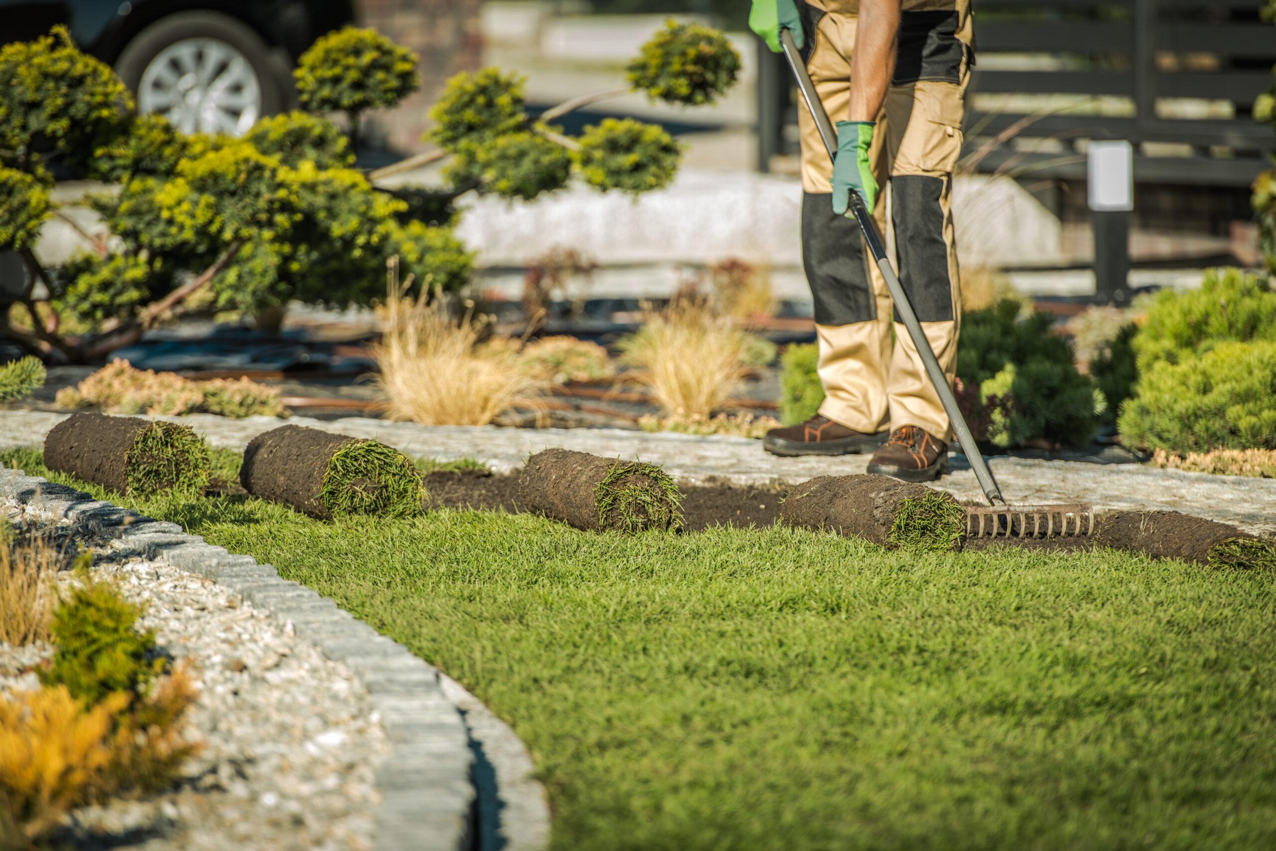 how to plant centipede grass sod